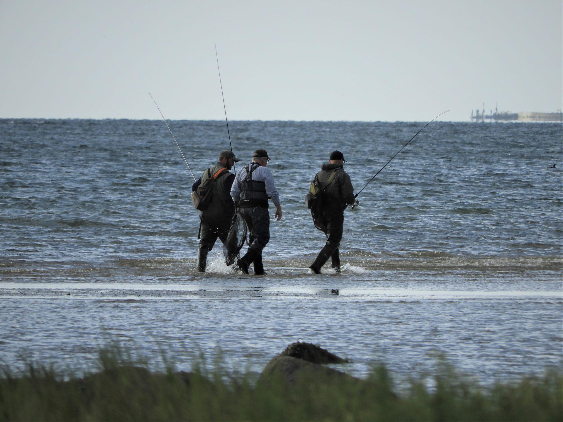 Havbars langs østkysten kan fanges flere steder