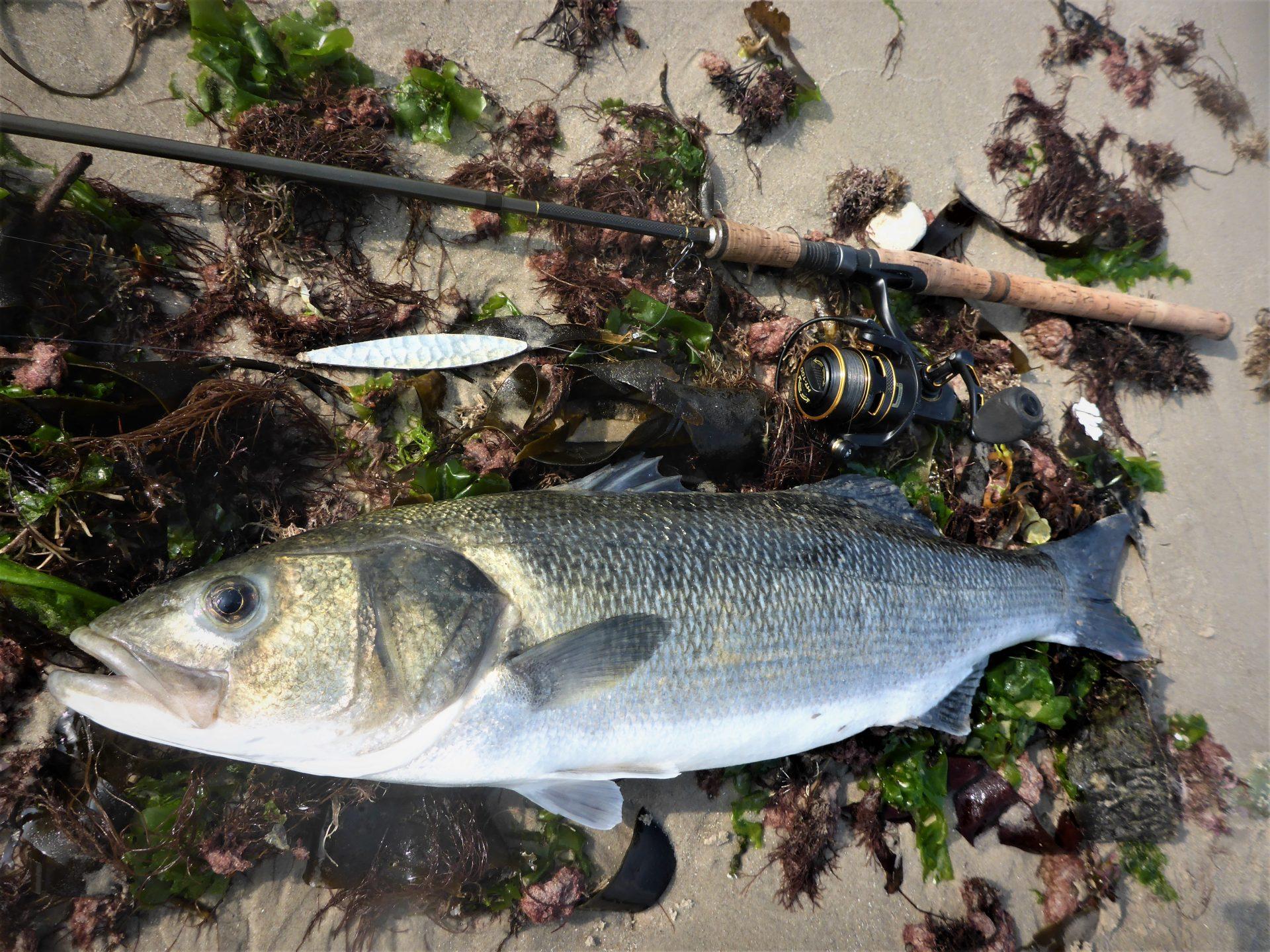 Fiskegrej og udstyr til fangst af hvabars kan læses om her.