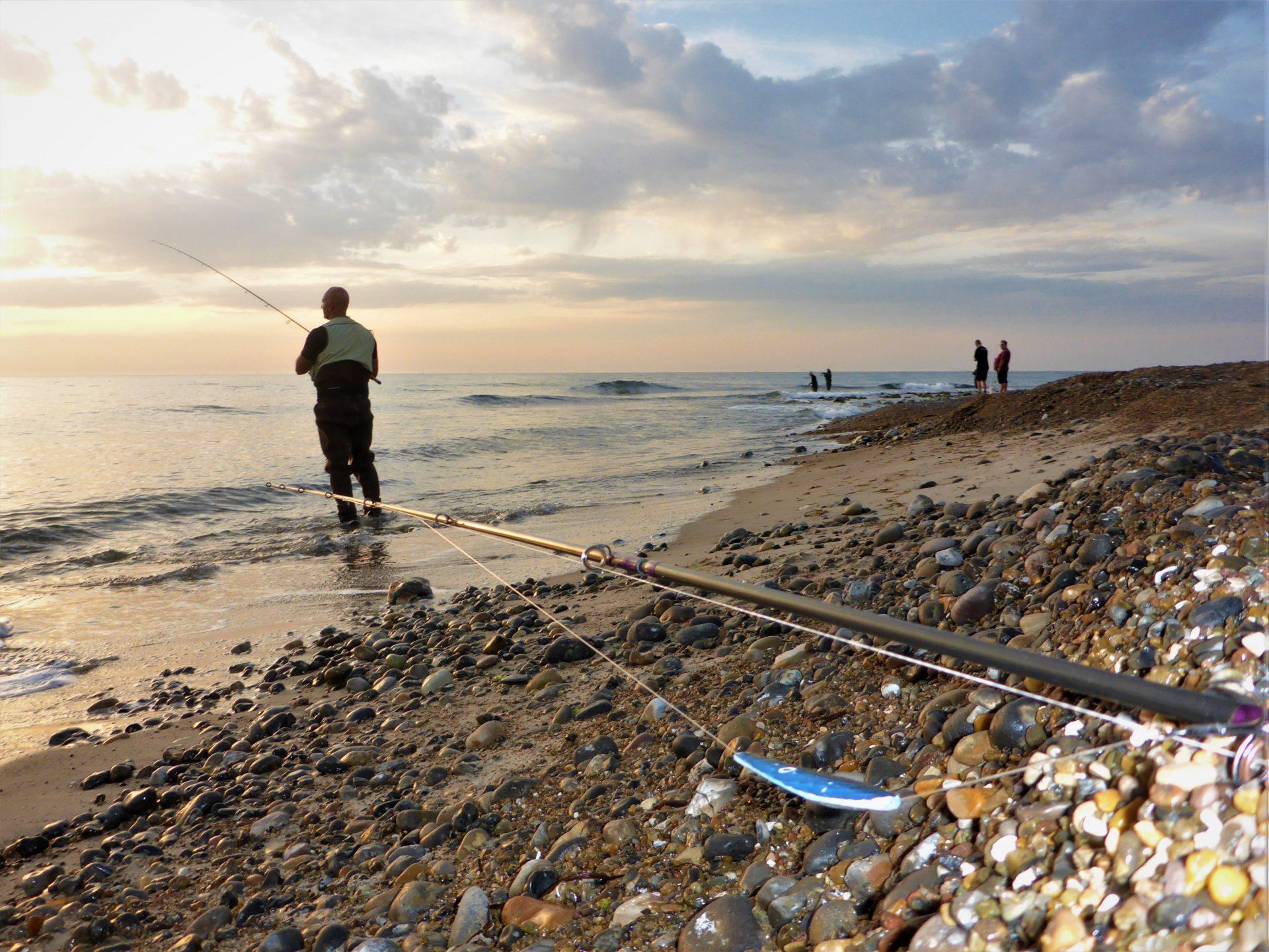 Havbars kan fanges fra land langs den jyske vestkyst.